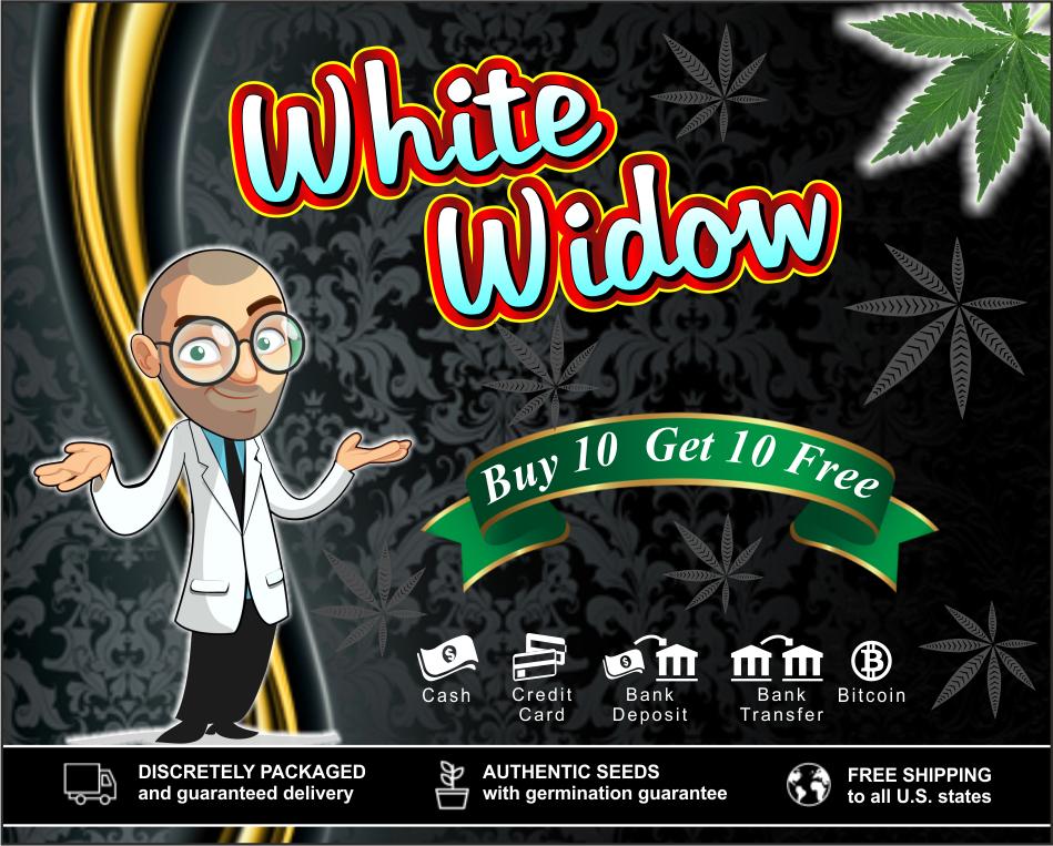 whitewidow-ilgm